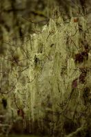 Hanging Moss by KingPinPhotography