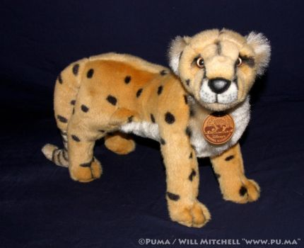Disney Animal Kingdom - Cheetah plush 1996 by dapumakat