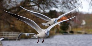 Synchronized Flying by RBSpictures