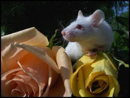 Mouse and Roses by LarkPash