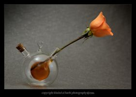 Still Life 5 by itash