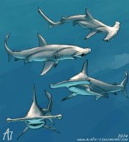 SW 2014 Scalloped Hammerhead by ALA1N-J