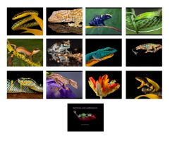 Reptile calendar images by AngiWallace