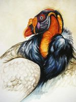 King Vulture 2 by HouseofChabrier