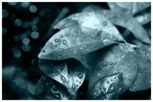 Raindrops keep falling... by UntamedUnwanted