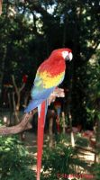 Parrot of Mexico by StudioMaya