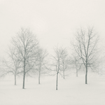 Blizzard Ballet by intao