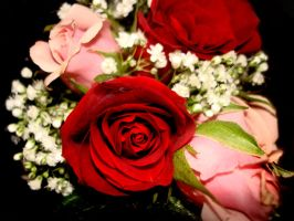 Roses by dhosford