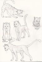 Warrior Cats by Idess by WarriorsClub