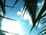 Blue sky through palm by FreezDay