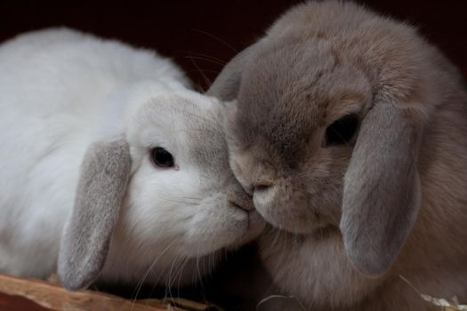 More snuggling bunnies by luthias