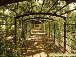 Summer Pergola by Losiane