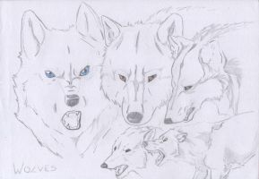 Wolves by Mooniqs