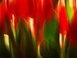 Tulips I by LissiSchnuff
