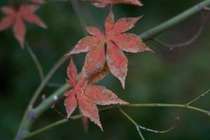 Fall color in the leaves 2 by dkbarto