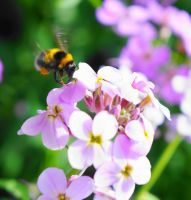 Busy Bee by hayleyonfire