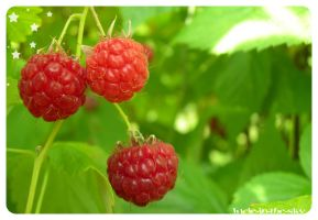 framboises by lucie-in-the-sKy