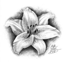 Megan's Lily by porcelainroses