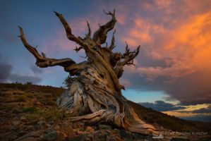 Legendary  Tree by Michaelthien
