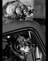 Cat and Dog by Arsenov