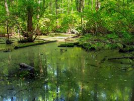 Great Swamp 9 by Dracoart-Stock
