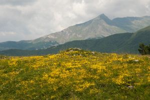 yellow on mountain by REcreates