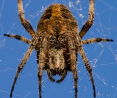 Spider Attack by mikemcnary