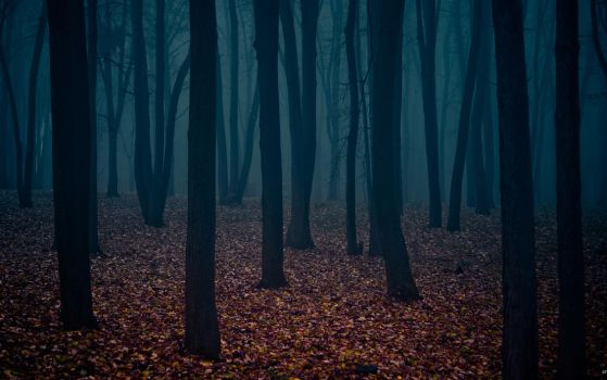 mysterious forest II by 5-G