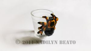 Tarantula Shot Glass by NadilynBeato