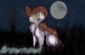:AT: Brownowl by Sia-Kitty