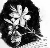 flower by imcy