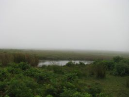 Nature 258 foggy pond by Dreamcatcher-stock