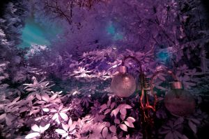 IR My Secret Garden by pohlmannmark
