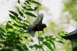 bird by Adrienneknott