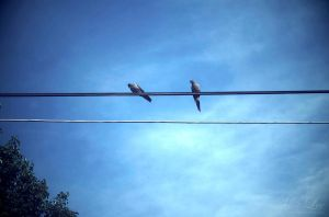 Out On The Wire by MiaLeePhotography