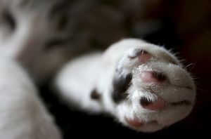 sushi's paw by m-lucia