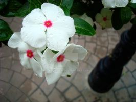 Cobblestone Flowers by krdesign
