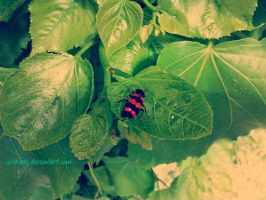 A little insect by cuteGaby