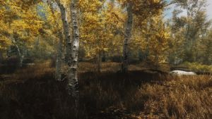 Birch Woods by OnlyKazisvet