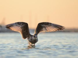 Taking off by corsuse