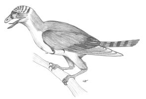 Sapeornis chaoyangensis by PaleoAeolos