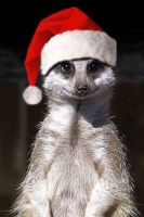 Merry Meerkat by joshpurple