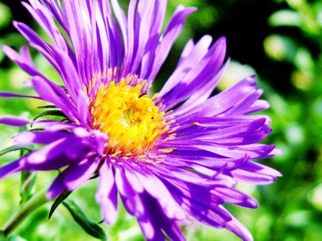 Unknown flower by cowalsky