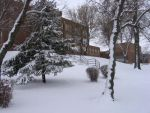 Bede in Snow by briles05