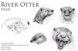 River Otter Head Drawings Ref by Vinnie14