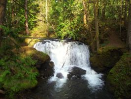 Whatcom Falls Park 04-04-14-007 by SkyfireDragon
