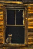 Cat in the window by ErkanKalenderli