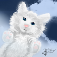 Wolkengeist  Kitty - Gift by xXBlackwolfangelXx