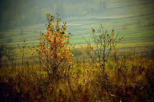The last days of autumn... by cichutko