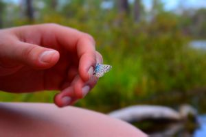A butterfly in the bog by The-shivering-leaf
